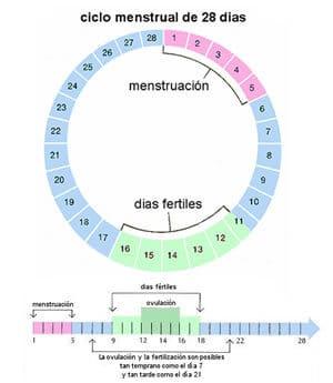 dias fertiles